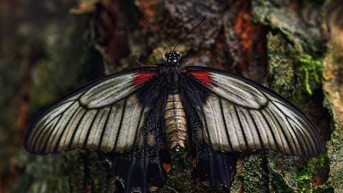 Foto d'estoc gratuïta de a l'aire lliure, ala, animal