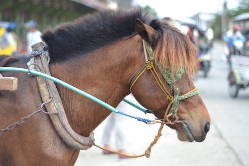 Free stock photo of horse head