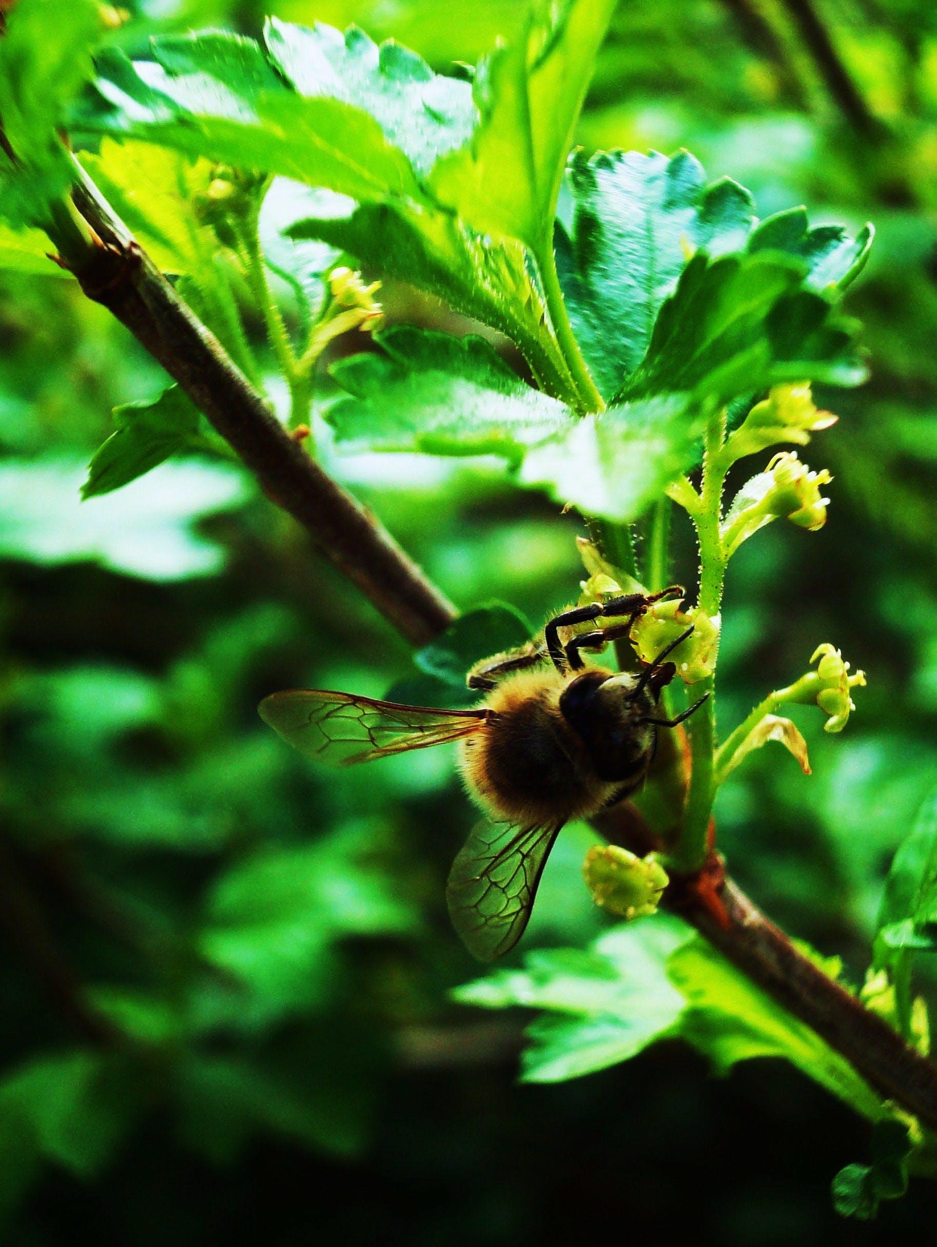 Free stock photo of flowers, green, bee, shrubs