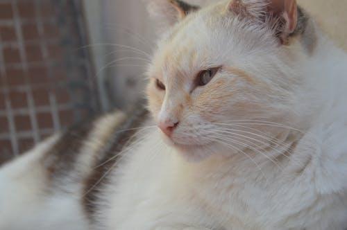 Free stock photo of feline