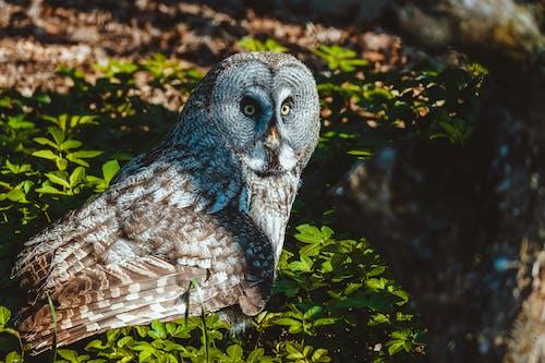 A Perched Owl