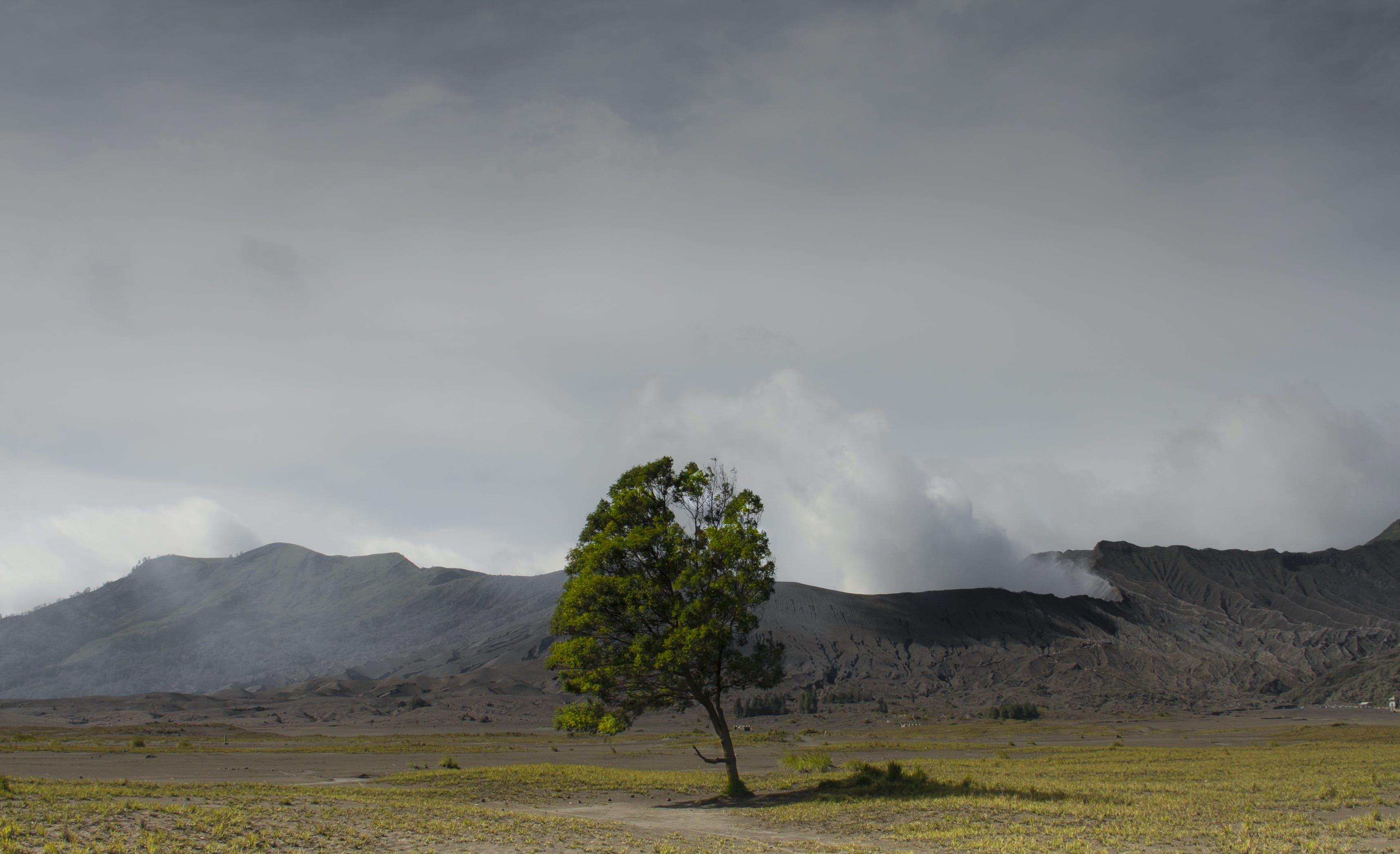 bromo, cloudy sky, green