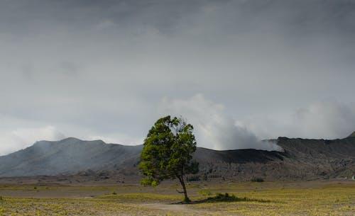 가판대, 경치, 고독, 구름 낀 하늘의 무료 스톡 사진