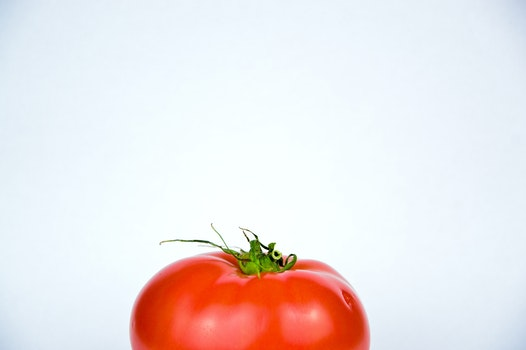 Free stock photo of food, tomato, still life, vegetable