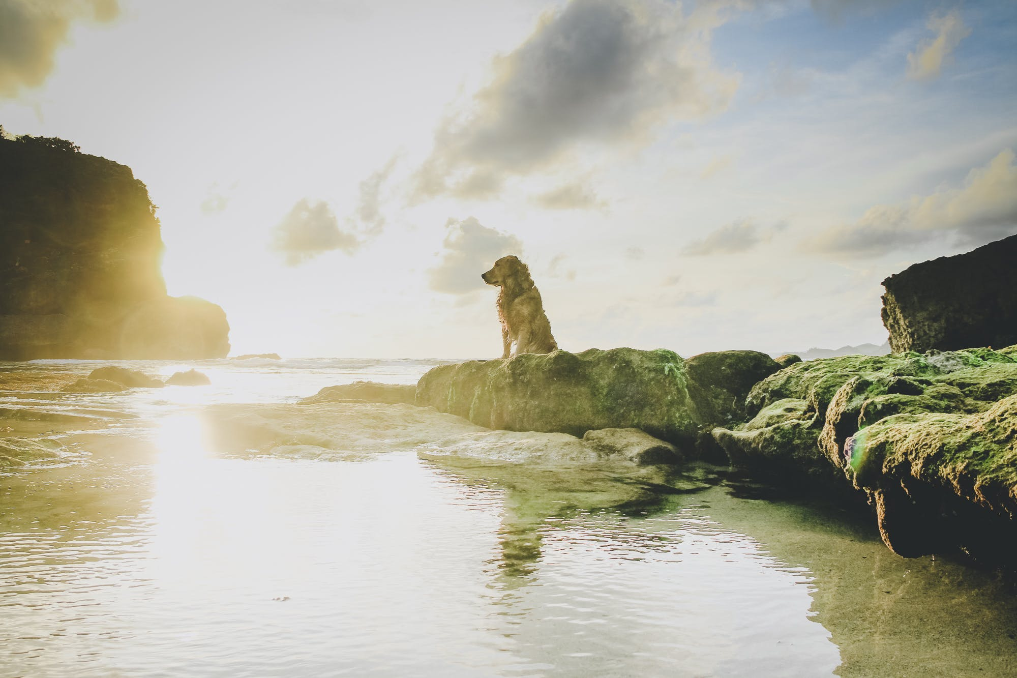 Free stock photo of beach, beachlife, coral, dog