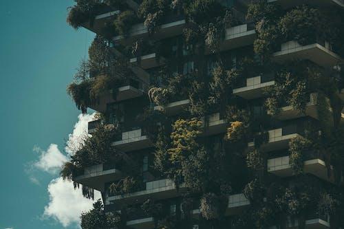 Gratis stockfoto met architectuur, boom, calamiteit