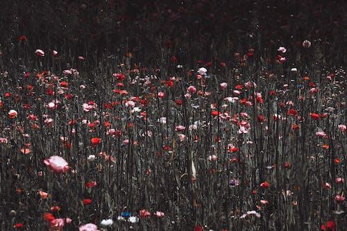 Gratis stockfoto met abstract, abstracte vormen, boom
