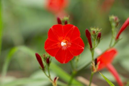 Imagine de stoc gratuită din alb, anotimp, botanic, botanică
