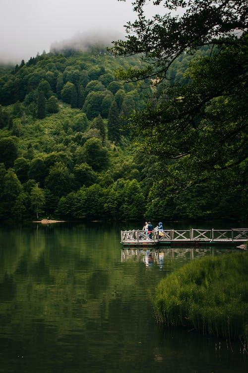 Fotos de stock gratuitas de agua, al aire libre, árbol