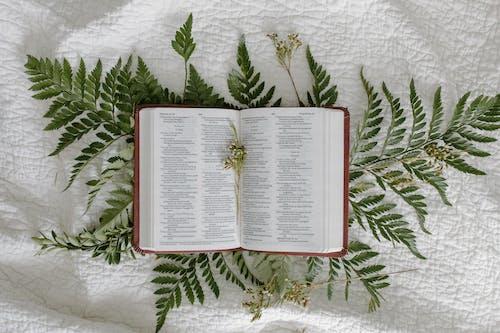 Free stock photo of baptism, baptist, belief