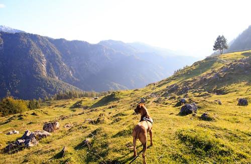 Kostnadsfri bild av bergen, dagsljus, dagtid, grand danois