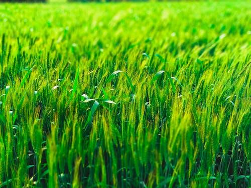 가까운, 낮, 녹색, 농장의 무료 스톡 사진
