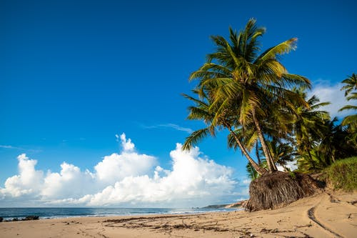 Palm Tree on Beach Shore Under Blue Sky and White Clouds