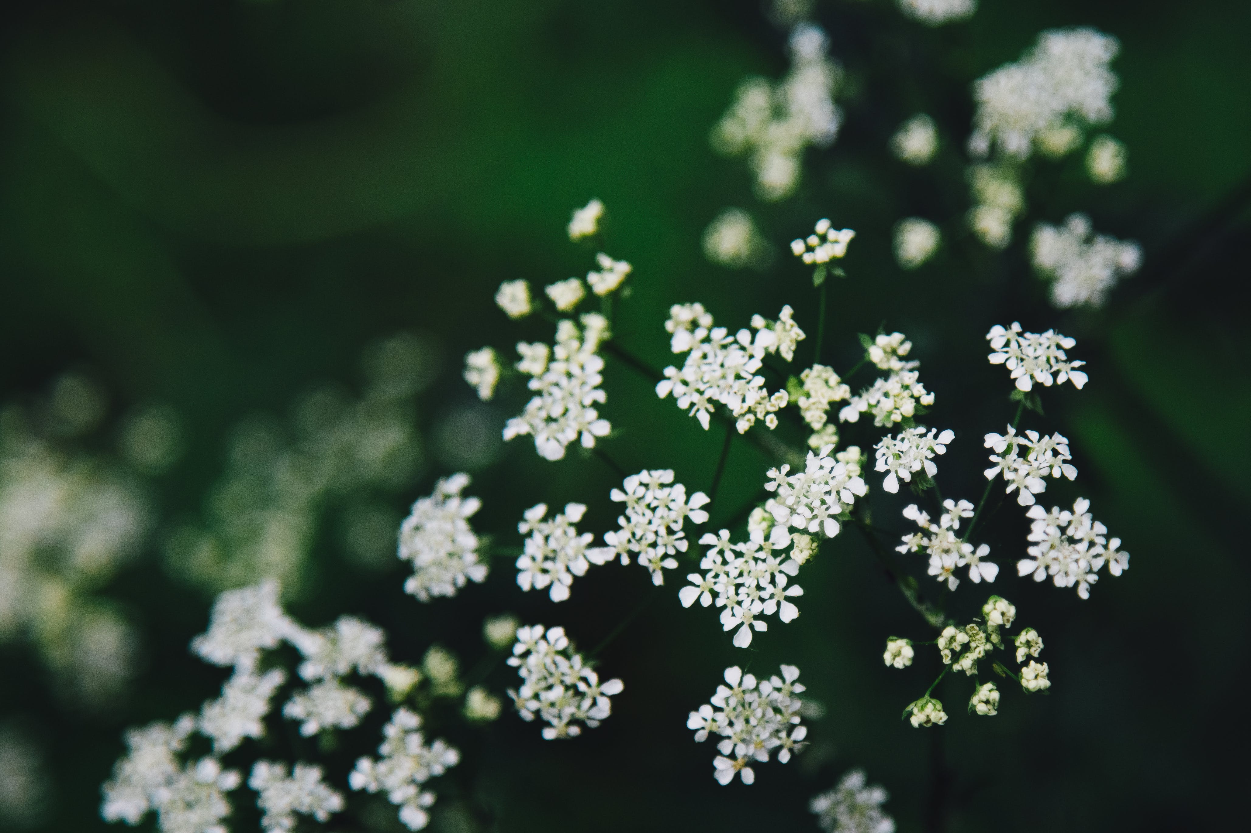 Free stock photo of flowers, forest, plant, white