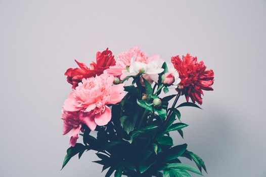 Free stock photo of flowers, plant, leaves, bulb