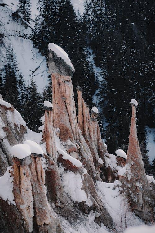 Základová fotografie zdarma na téma 4k tapeta, borovice, cestování