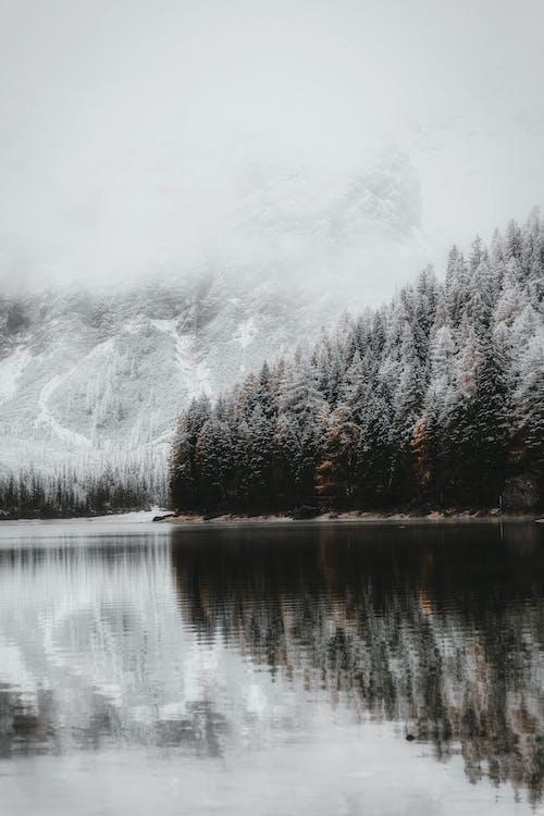 Základová fotografie zdarma na téma 4k tapeta, dolomity, dřevo