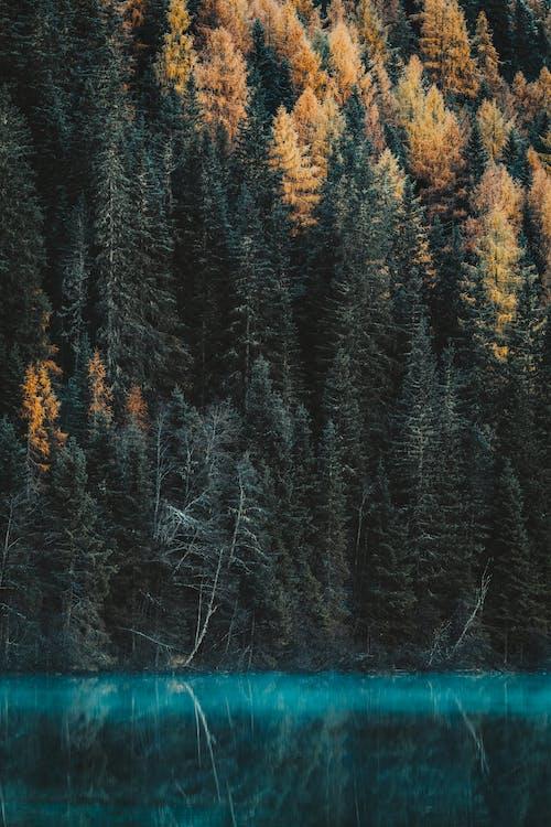 Základová fotografie zdarma na téma 4k tapeta, barva, borovice