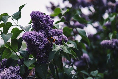 Základová fotografie zdarma na téma 4k tapeta, čichat, flóra