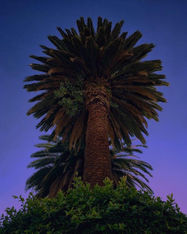 fioletowy, kolory, liście palmowe