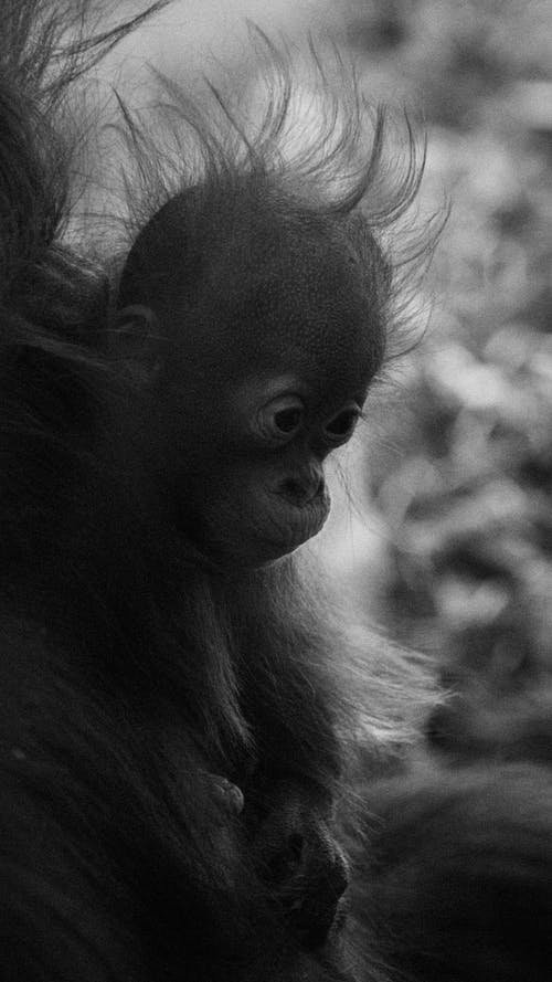 Grayscale Photo of Monkey in Forest