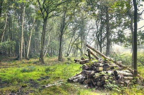Základová fotografie zdarma na téma les, pohoda, příroda, stromy