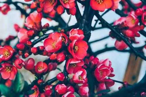 Красные лепестковые цветы в цвету