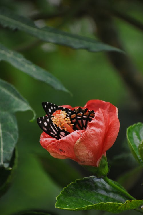 Black and Brown Butterfly on Red Flower