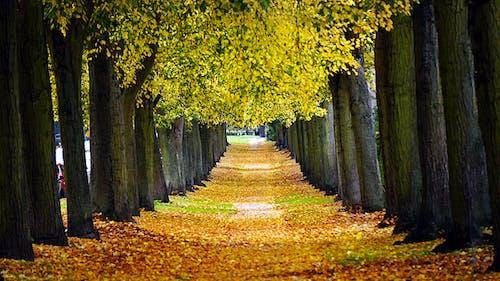 Ảnh lưu trữ miễn phí về cây, lá khô, lá rụng, màu vàng