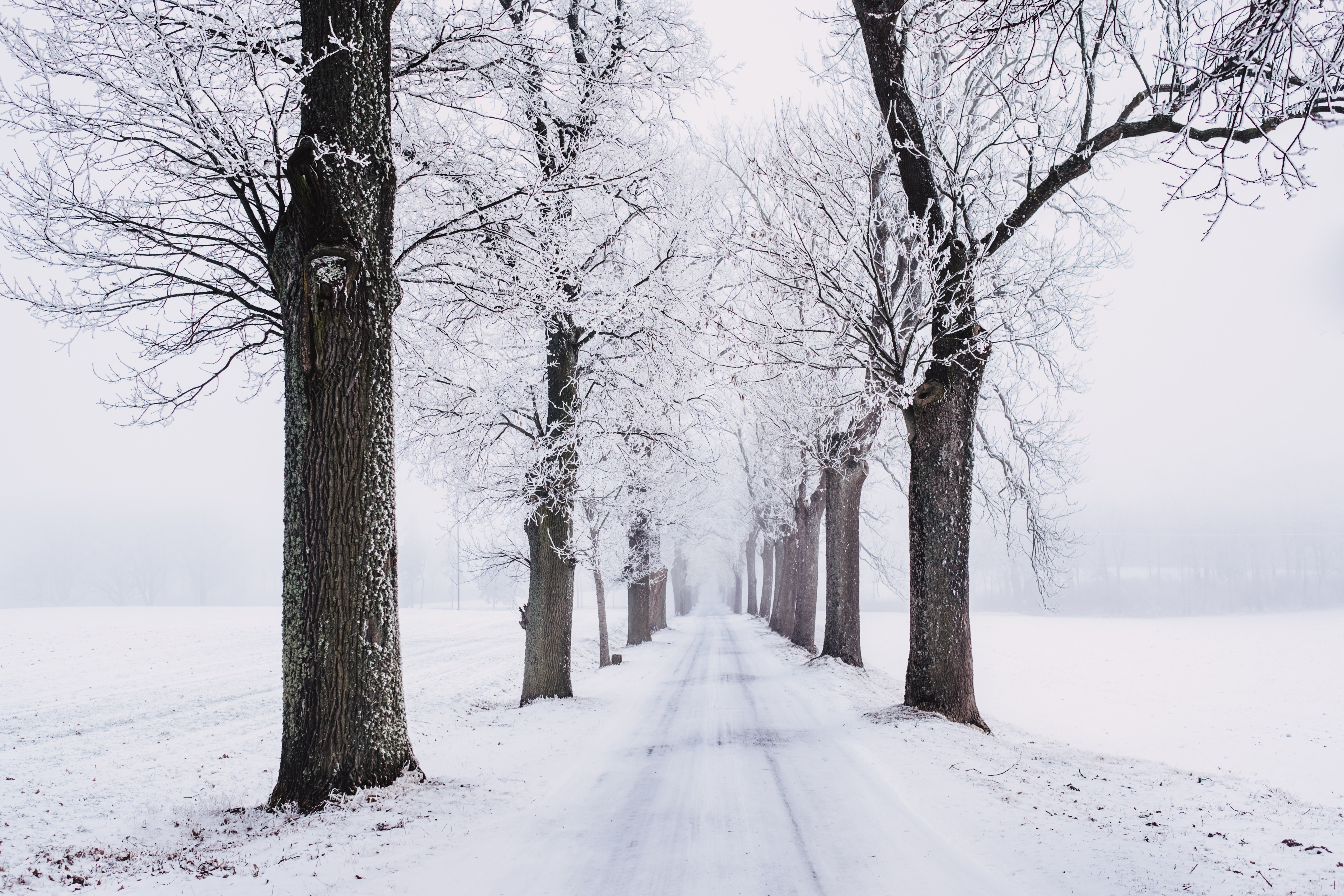 Winter Pictures Pexels Free Stock Photos
