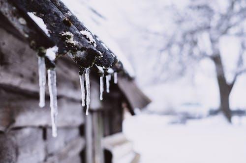 Immagine gratuita di albero, concentrarsi, freddo, ghiaccio
