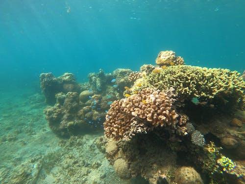 A Coral Reef Underwater