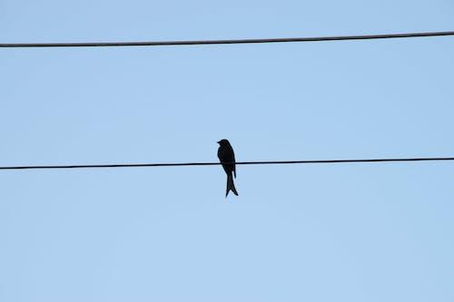서 있는, 철사, 푸른 하늘의 무료 스톡 사진