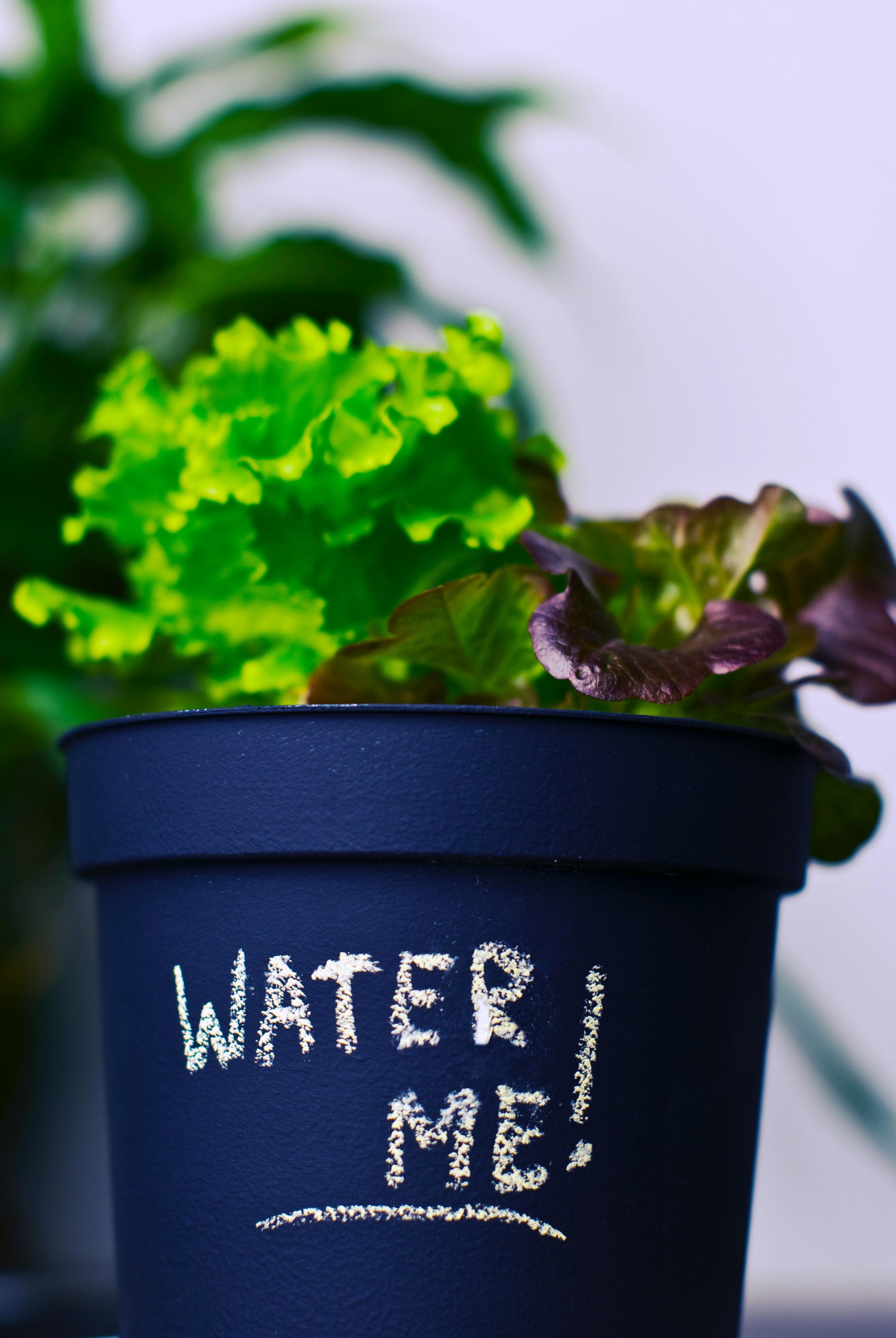 kostenloses foto zum thema: blumentopf, größer werden, grüner salat