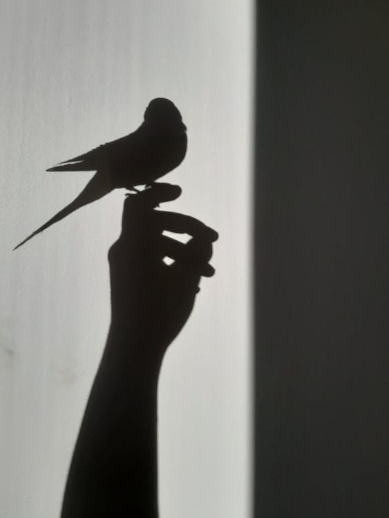 Silhouette of Bird on White Wall