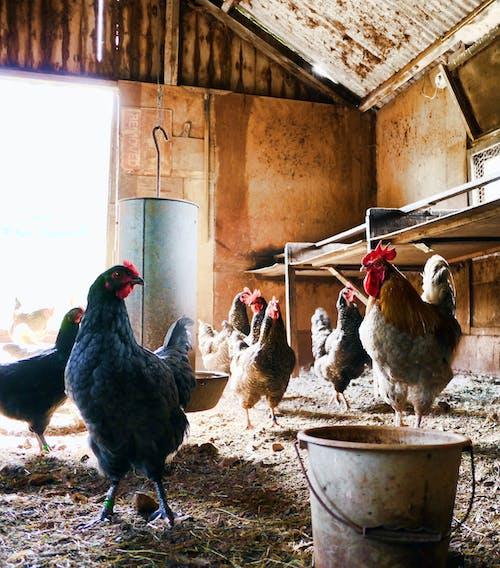 Kostenloses Stock Foto zu bauernhof, drinnen, farben, farm