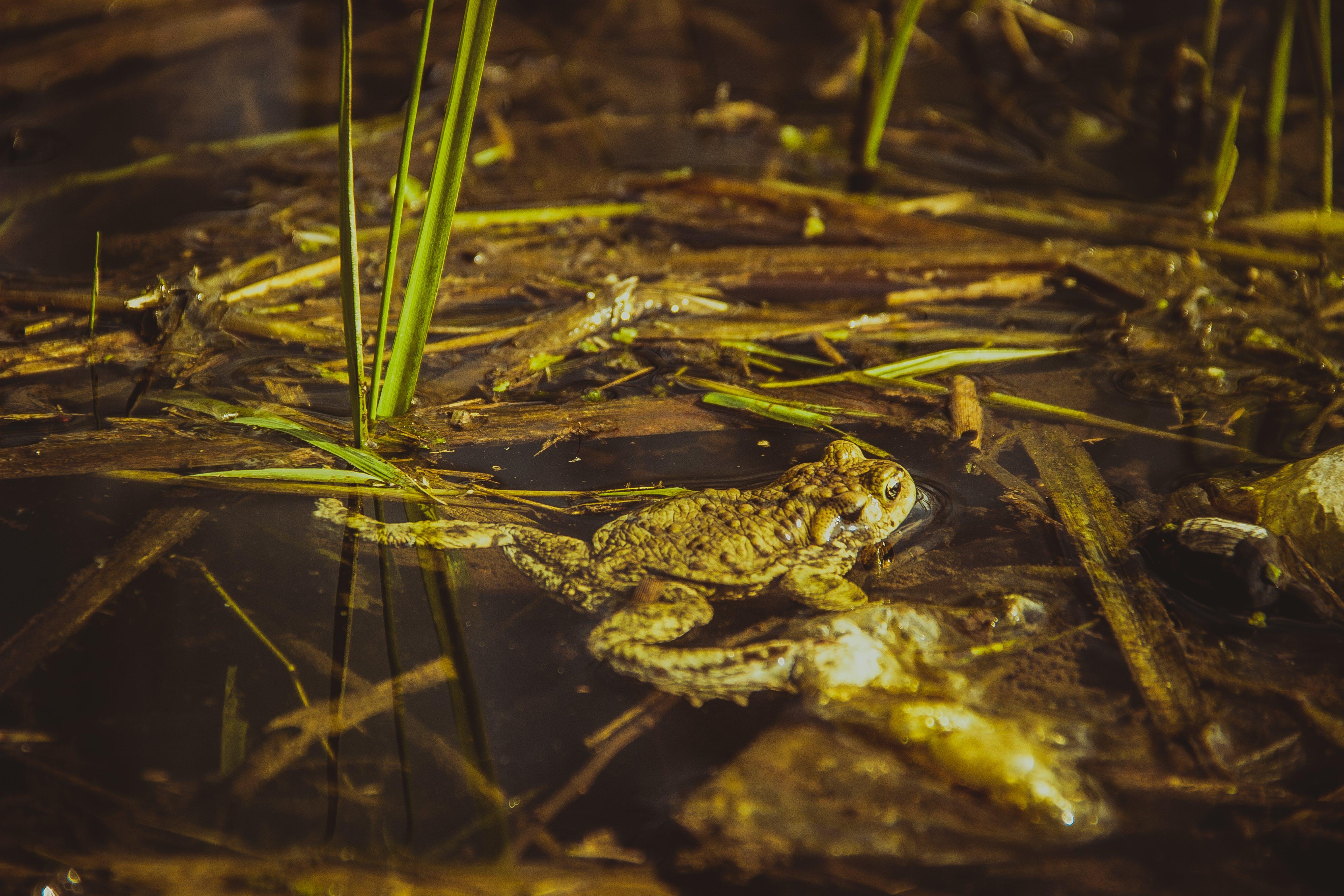 Brown Frog Beside Green Grass