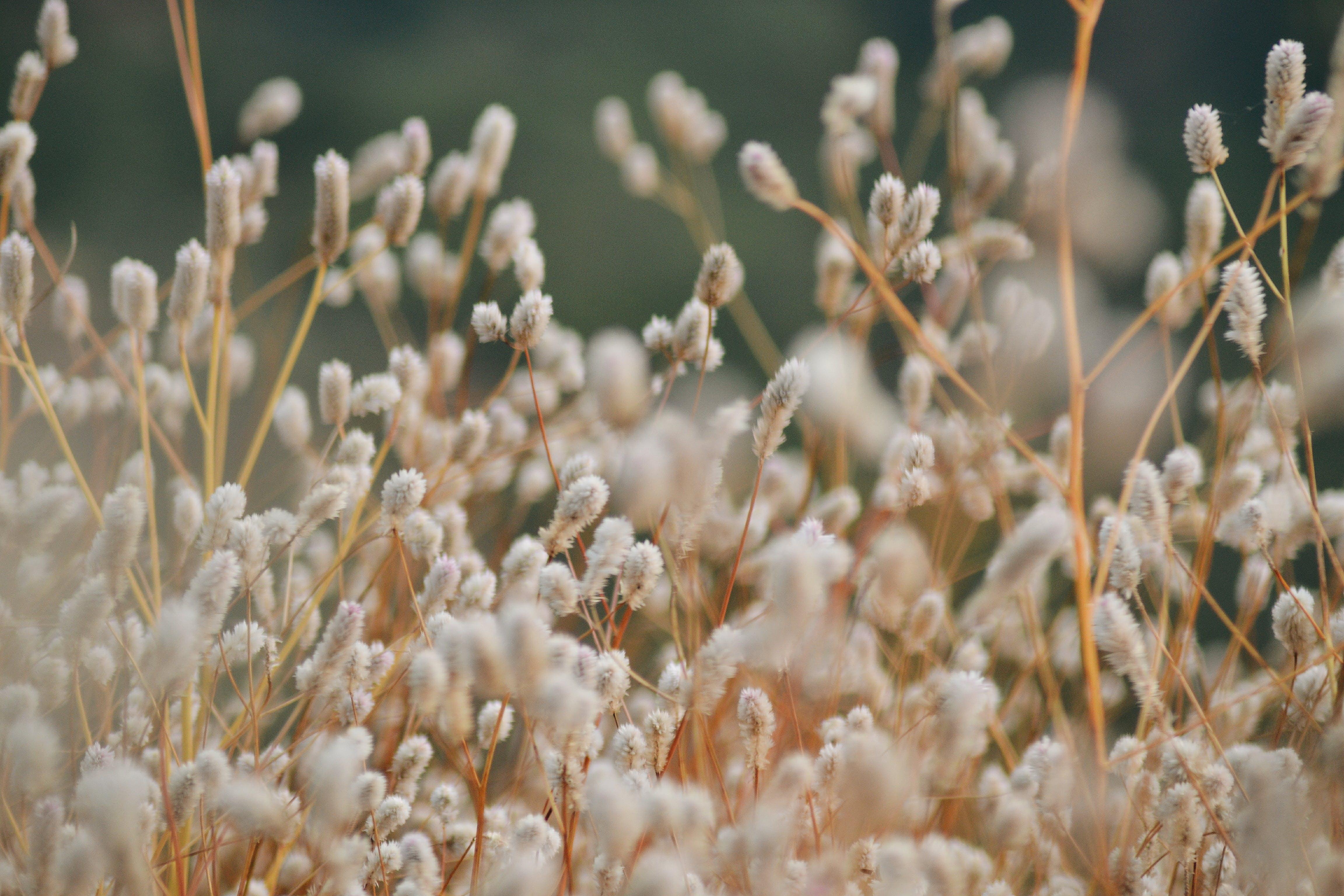 Darmowe zdjęcie z galerii z botaniczny, dzień, flora, kolory