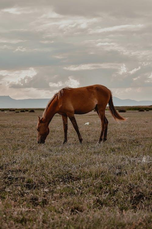 Immagine gratuita di animale, azienda agricola, bestiame
