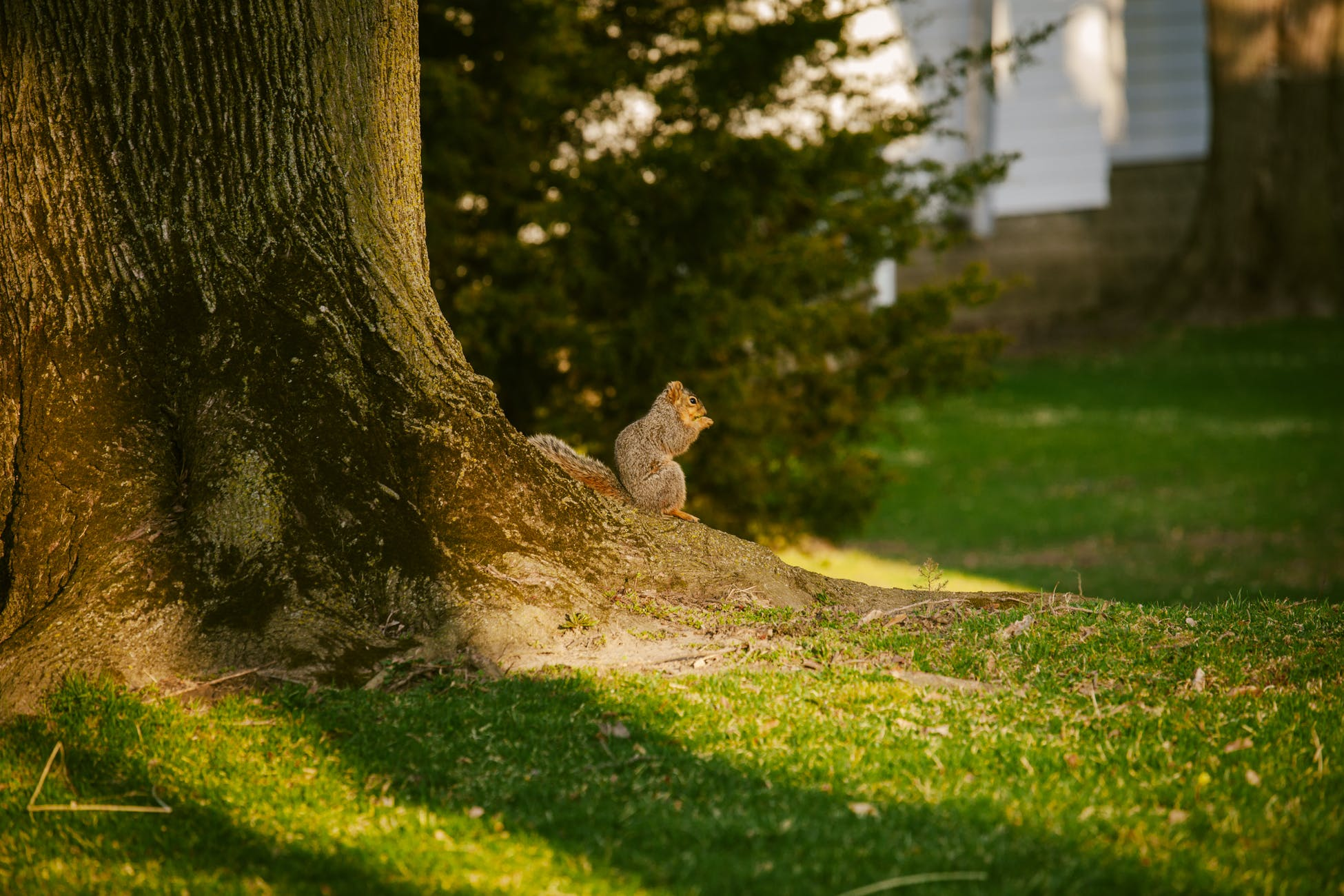 Free stock photo of nature, outdoors, squirrel
