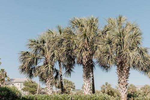 Free stock photo of backdrop, beach, beach house