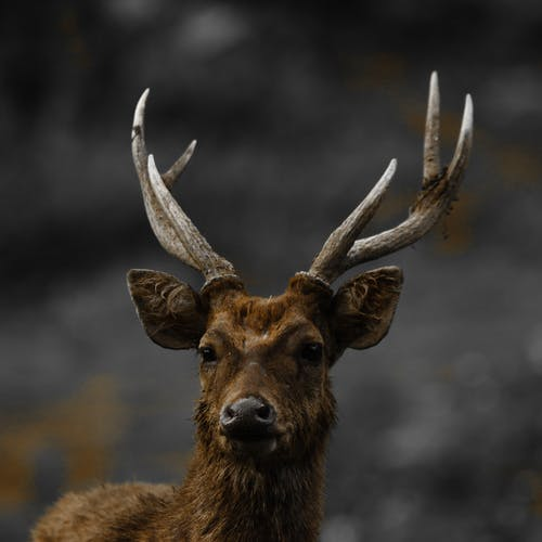 Free stock photo of animal, animal eye, animal head
