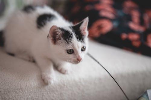White and Black Kitten on White Textile