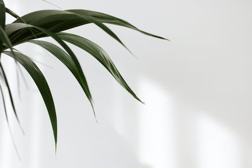 Fotos de stock gratuitas de Arte, bambú, brillante