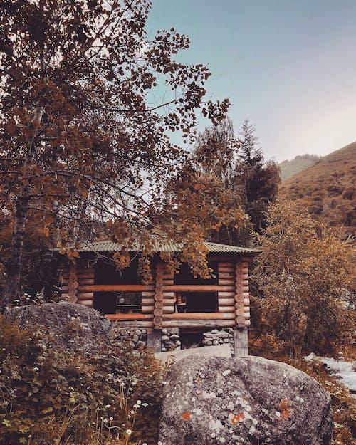 Foto d'estoc gratuïta de almaty, arbre, arquitectura