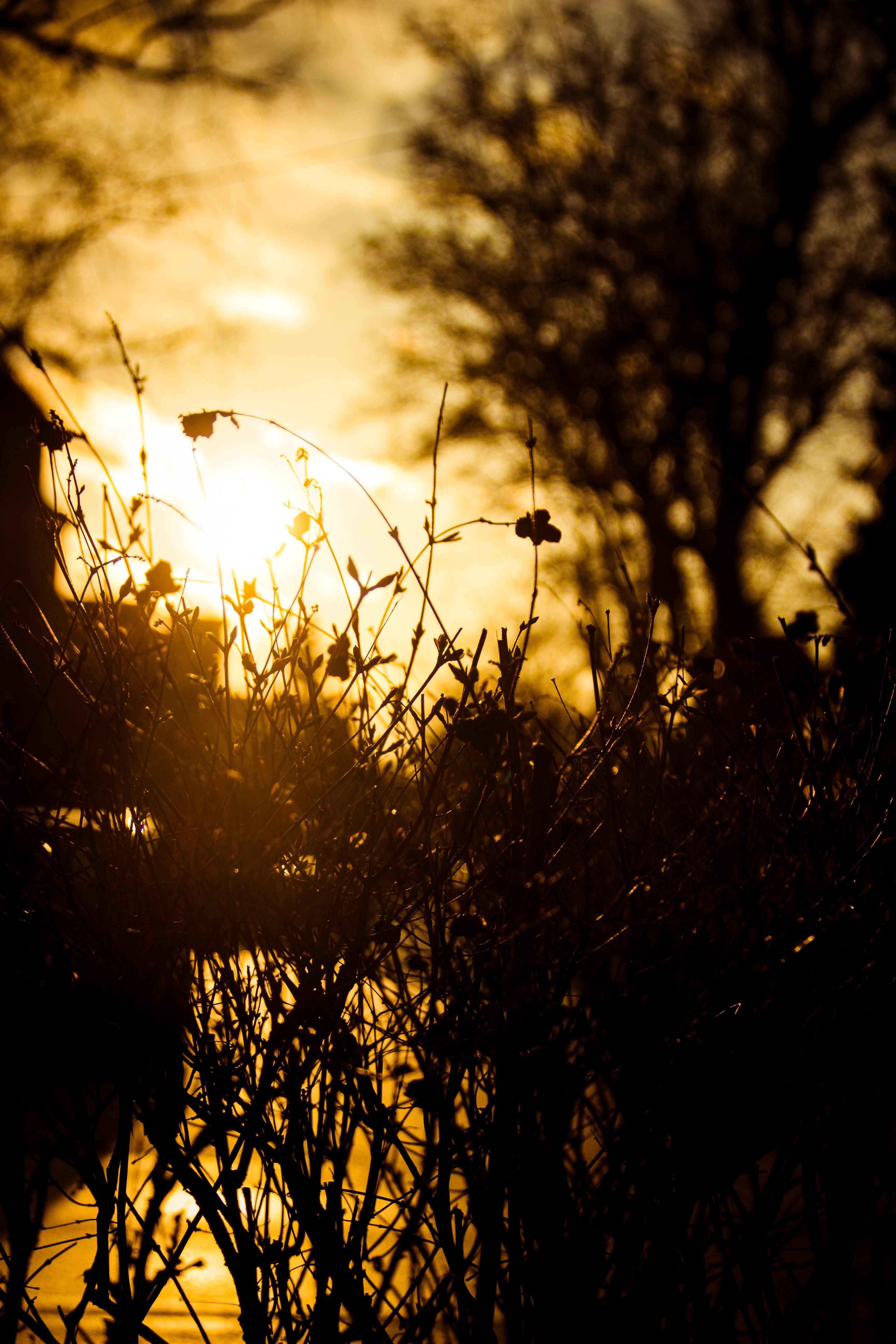 Free stock photo of wood, sun, tree, view
