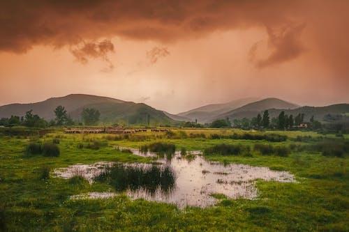 คลังภาพถ่ายฟรี ของ ที่ราบสูง, ฝน, หญิงเลี้ยงแกะ
