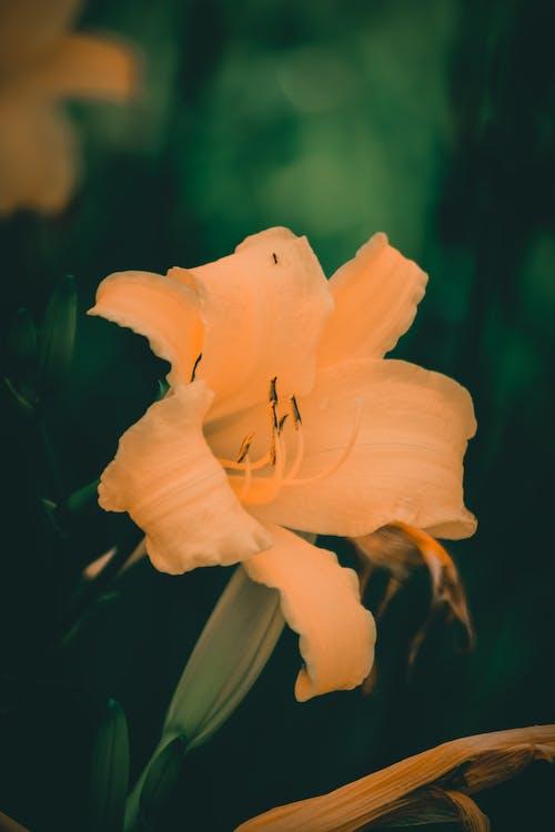 Δωρεάν στοκ φωτογραφιών με κίτρινη, κίτρινο, κίτρινο άνθος