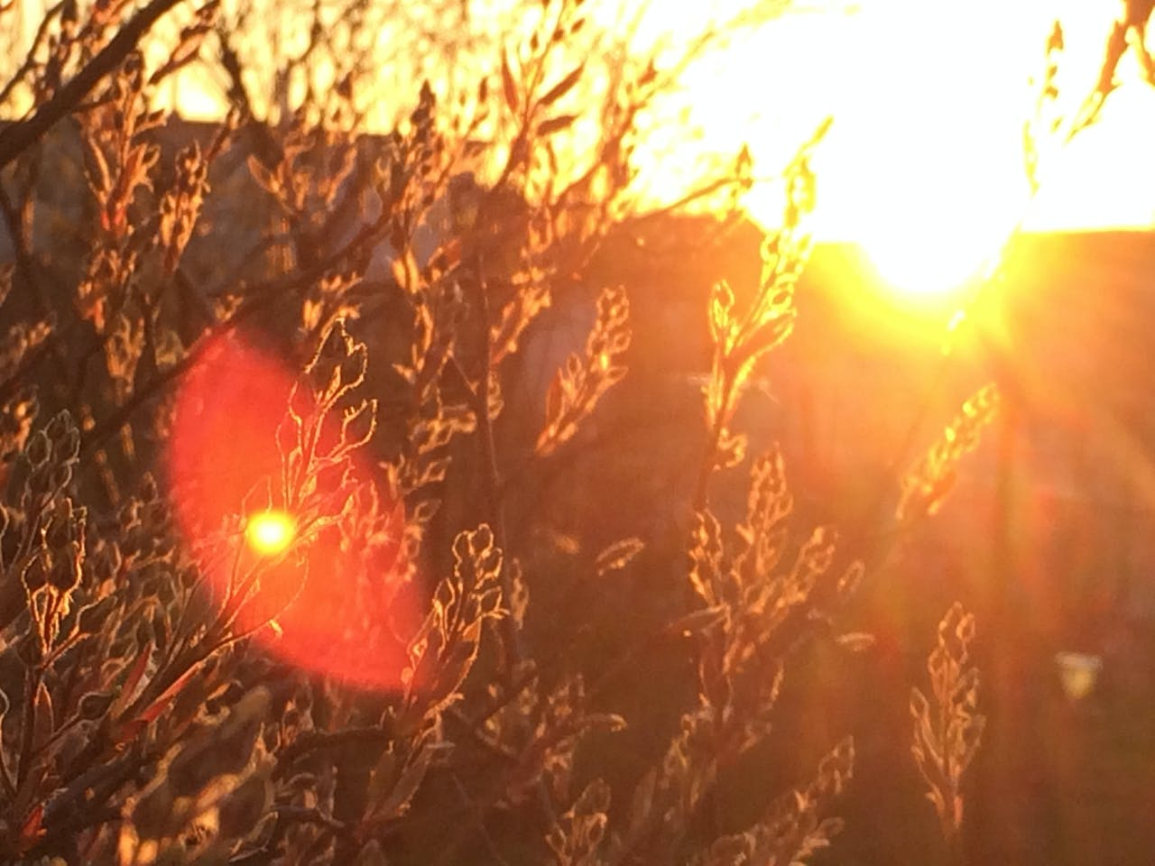 Free stock photo of light, red, iphone, sunrise