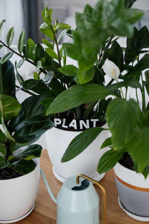 Green Plant in Ceramic Pots